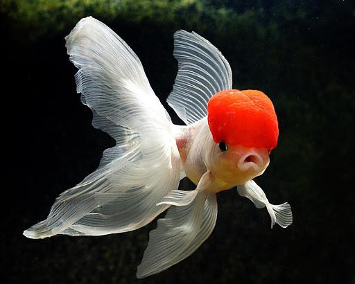 Fish vitamins and mineral