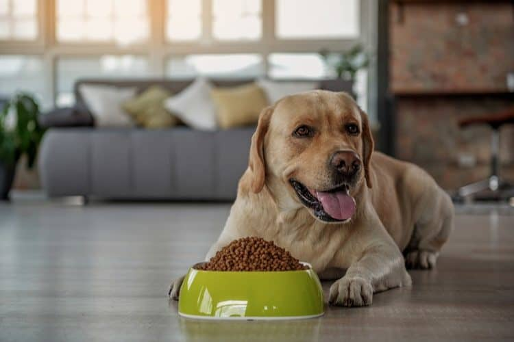 Neutered dog foods