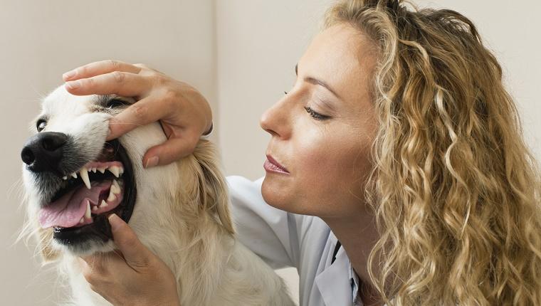 dental care in dogs