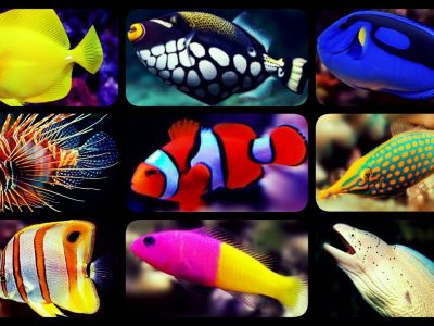 Aquarium Fish Species | The Most Beautiful Aquarium Fish