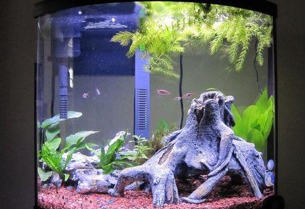 Aquarium Mango Root and Prices | Aquarium Decor Types