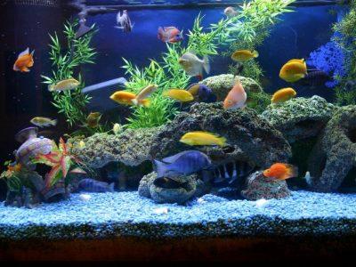 Aquarium Accessories and Prices | Aquarium Supplies