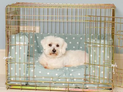 Dog Cages and Prices | Types of Cages for Dog