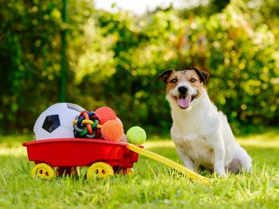 Dog Toys and Prices | Toy Types for Dogs