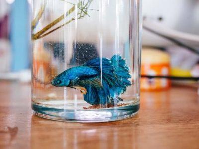 Fish Care | Ways to Keep Aquarium Fish Healthy