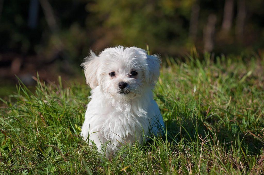 Hairless Dog Breeds