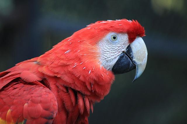 Parrot Care