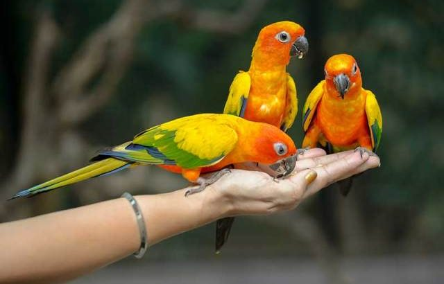 Parrot Care Products and Prices