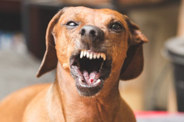 aggression problem in dogs
