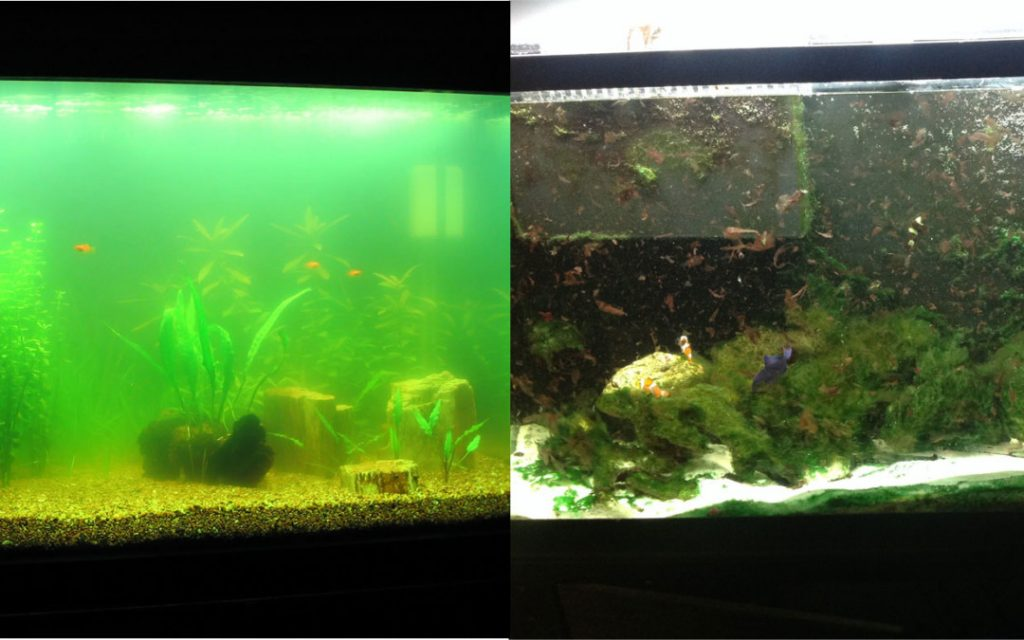 algae problem in the aquarium