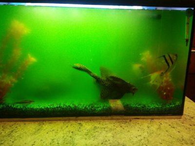 Algae Problem in the Aquarium