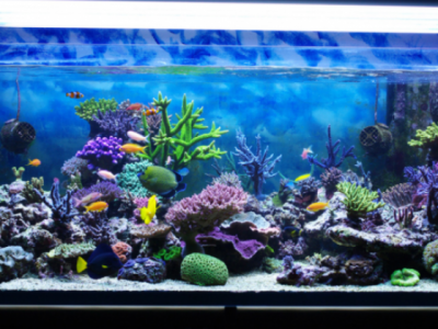 Aquarium Water Regulators and Prices