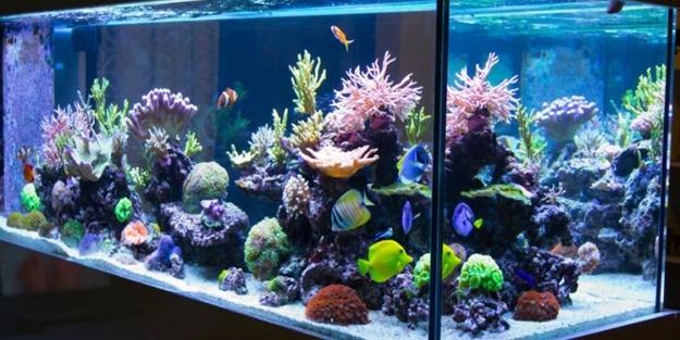 aquarium water regulators