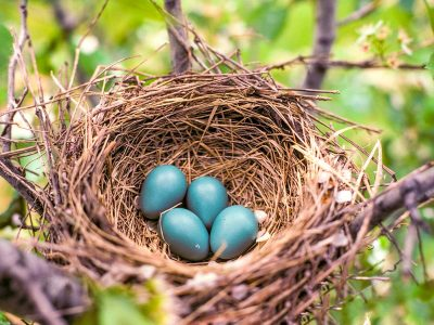 Bird Nests Types and Prices