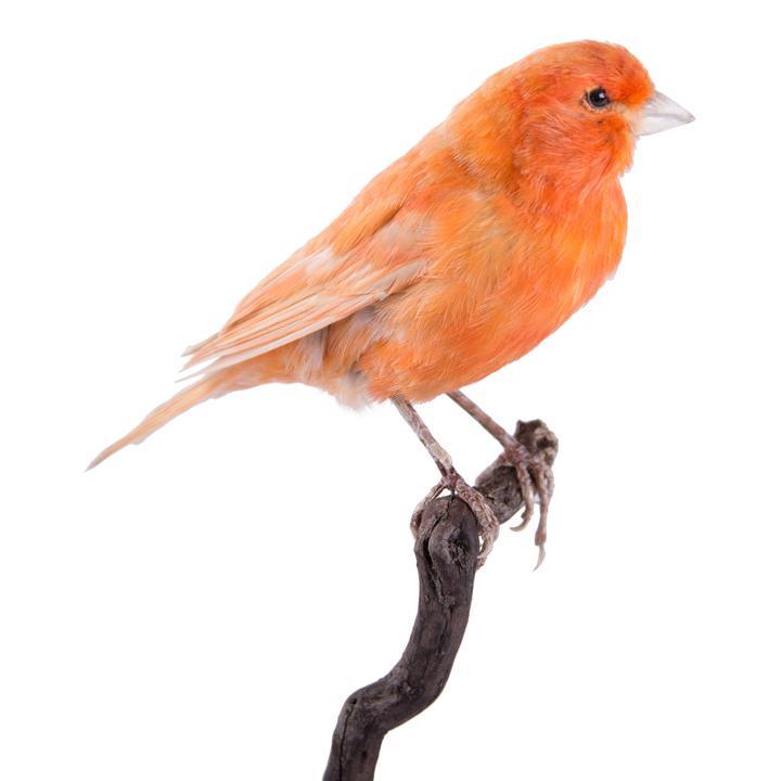 canary materials