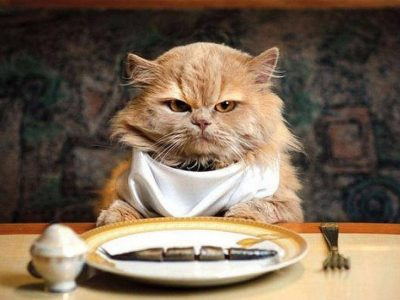 Nutrition in Cats   How should cats feed?