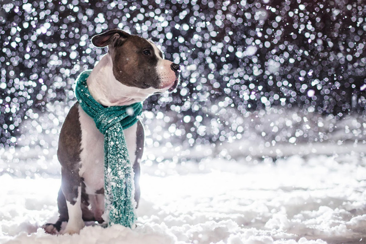 cold resistance of dogs
