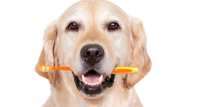 Dental Care in Dogs | How To Take Care Of Dogs?
