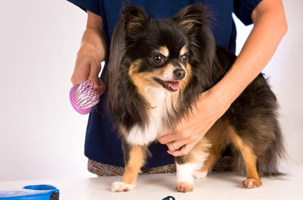 Dog Brushes and Prices | Dog Feather Care