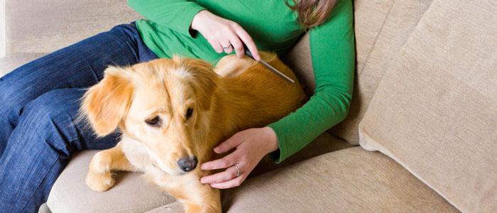 dog flea comb