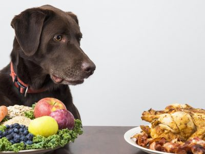 Nutrition in Dogs | How should dogs be fed?