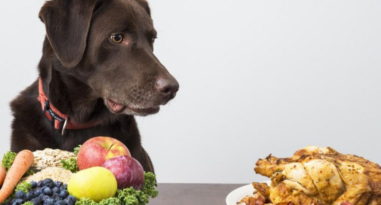 Nutrition in Dogs   How should dogs be fed?