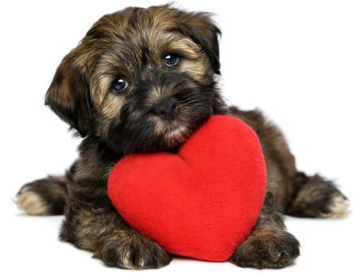 Nutrition in Heart Diseased Dogs