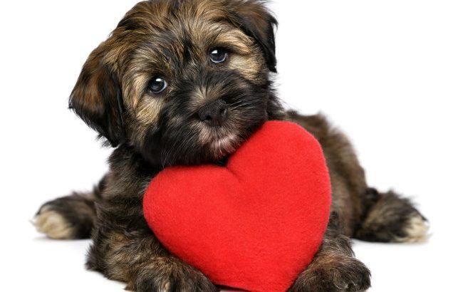Nutrition in Heart Diseased Dogs