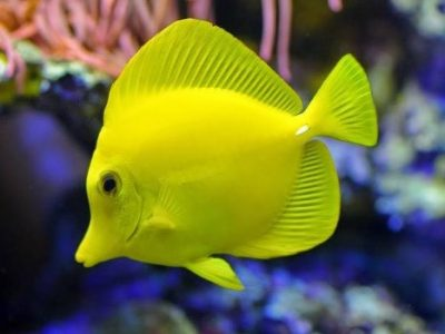 Basic Rules in Fish Care | Things to Consider in Fish Care