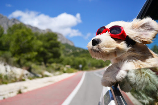 holiday plan with dog