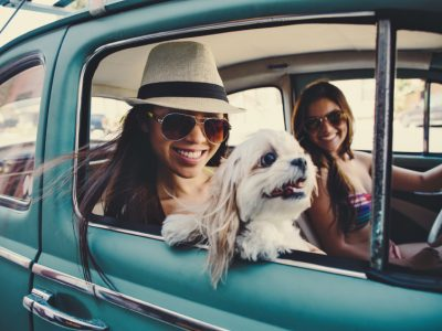Holiday Plan with Dog | Vacation and Travel with Your Dog