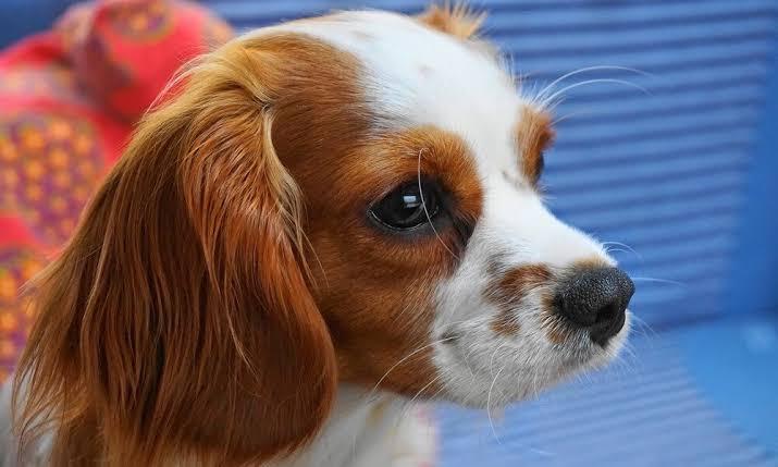 ornamental dogs.jpg