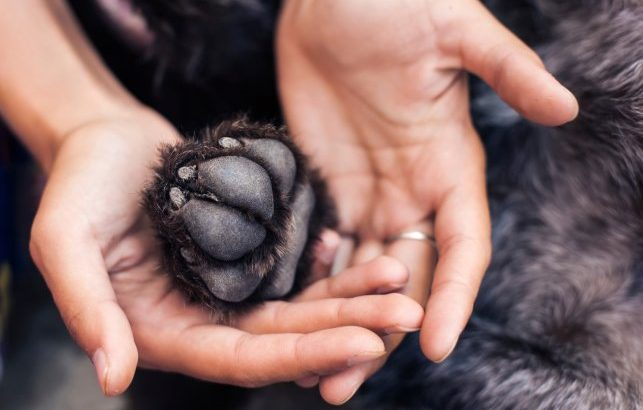 Paw Care in Dogs   How to Care for the Paw in Dogs?