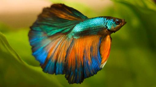 stress in aquarium fish