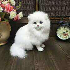 Adorable Persian Kittens Gift,