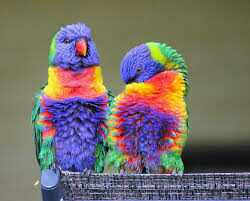 Spoken gift and intelligent parrots Macaws,