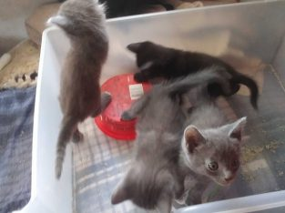 Kittens READY for their forever home