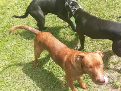 Two lab mix available